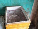 Bắt giữ hơn 300 kg lòng lợn hôi thối chuẩn bị bán sang Trung Quốc