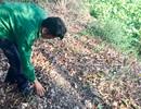 Vụ 300 xác thai nhi chôn tại bãi rác: Bệnh viện sản xử lý nhiều vụ phá thai
