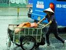 """Sài Gòn bất ngờ đón trận """"mưa vàng"""" trong ngày nghỉ lễ"""