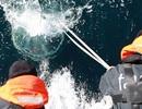 Gần 200.000 virus bí ẩn mới được phát hiện trong đại dương