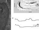 Phát hiện dấu chân con người lâu đời nhất ở châu Mỹ