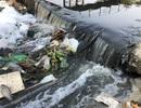 Cá chết, rác thải lại nổi đầy các kênh nước ở Đà Nẵng