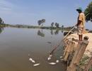 Cá chết nổi trắng sông Bàn Thạch