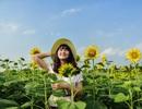 """""""Phát sốt"""" với cánh đồng hoa hướng dương đẹp ngất ngây ngay gần Hà Nội"""