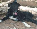 """Thái Lan: Chú chó què gây """"bão"""" vì cứu bé sơ sinh bị mẹ chôn sống"""