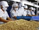 Đột biến: Trung Quốc tăng mua hạt điều, mở nhà máy dọc biên giới VN