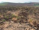 Gây thất thoát hơn 700 triệu đồng, 4 cán bộ Ban quản lý rừng phòng hộ bị khởi tố