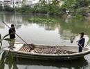 Hà Nội: Cá chết nổi trắng hồ Văn Chương, dân sống quanh hồ không dám... thở