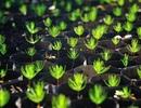 Philippines: Mỗi học sinh phải trồng 10 cây xanh mới được tốt nghiệp