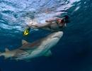Mải mê bơi lội, cô gái bị cá mập bám sát sườn mà không hay biết