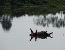 Lợn chết bị vứt bừa, bốc mùi nồng nặc ở xã ngoại thành Hà Nội