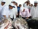 """""""Giấy thông hành"""" cho cá ngừ đại dương vào thị trường châu Âu"""