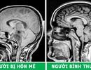 Những hình chụp X-quang giúp chúng ta hiểu hơn về cơ thể mình