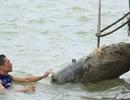 Trục vớt thành công quả bom dưới đáy sông Lam
