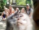 """Đi nghỉ mát, gia đình được khỉ chụp """"tự sướng"""" ấn tượng như người"""