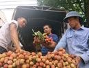Tư thương Trung Quốc lùng mua vải thiều, dân Bắc Giang thu tiền tỉ