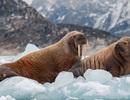 Đảo quốc Greenland mất hơn 2 tỷ tấn băng chỉ trong một ngày