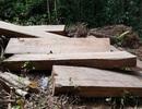 """Cận cảnh cánh rừng Kbang bị tàn phá """"ngổn ngang""""!"""