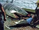 """Một số bức ảnh lần đầu công bố về phim trường """"Hàm cá mập"""""""