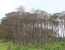 """Tỉnh Đắk Nông """"hô hào"""" bảo vệ rừng"""