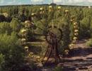 Vì sao thực vật vẫn phát triển tốt ở khu vực thảm hoạ Chernobyl?