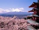 8 công ty du lịch Việt bị Nhật Bản hủy bỏ, đình chỉ tư cách xin visa