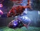 5 robot động vật siêu đáng yêu và hữu ích