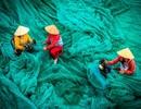 Vẻ đẹp lao động của Việt Nam trong những khoảnh khắc của thế giới