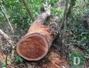 Vụ phá rừng di sản tại Quảng Bình: Sẽ tiếp tục xử lý nghiêm trách nhiệm