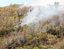 Cháy rừng bạch đàn, đạn nổ đì đùng