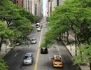 5 lợi ích tuyệt vời mà cây xanh mang đến cho các thành phố!