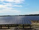 """Dự án điện mặt trời đổ xô về Hà Tĩnh, lãnh đạo tỉnh băn khoăn """"thật sự rất khó hiểu""""!"""