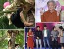 Kim Tử Long, Ngô Kiến Huy choáng khi chứng kiến cụ bà 77 tuổi leo dừa