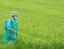 Nông dân gieo xuống đồng ruộng trên 120 nghìn tấn thuốc bảo vệ thực vật và phân hóa học mỗi năm