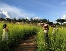 Chuyện lạ Kon Tum: Trồng rau cải làm du lịch, có thêm 20 triệu/tháng