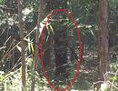 Đi hái măng tá hỏa phát hiện thi thể người đàn ông trong tư thế treo cổ