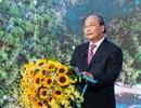 """Thủ tướng yêu cầu: """"Không được bê tông hóa Phú Quốc"""""""