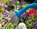 Bí quyết chăm sóc cây cảnh để vườn nhà luôn xanh mướt bất chấp nắng nóng