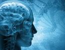 Đã tìm ra cách đối phó với bệnh chết não không thể chế ngự