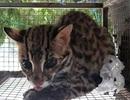 Hơn 140 cá thể động vật hoang dã được giải cứu từ đầu năm 2019