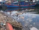 Vì sao âu thuyền, cảng cá lớn nhất Đà Nẵng ô nhiễm nặng?