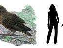 Phát hiện hoá thạch loài vẹt lớn nhất trên Trái Đất