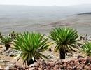 Tìm thấy hầm đá trú ẩn 47.000 năm tuổi ở châu Phi