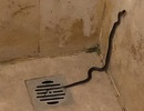 Đang mải tắm, du khách hoảng hốt bỏ chạy vì thấy rắn chui từ cống lên