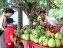 Đến xứ Quảng đừng quên ghé làng trái cây nức tiếng Đại Bình
