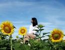 """Giới trẻ phát sốt với vườn hoa hướng dương đẹp """"lịm tim"""" gần Hội An"""