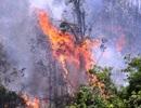 Cháy 3ha rừng trồng, uy hiếp nhiều nhà dân