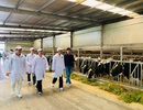 """""""Resort"""" bò sữa Tây Ninh là hạt nhân để xây dựng vùng chăn nuôi bò sữa an toàn"""
