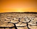 Chuyện gì sẽ xảy ra nếu toàn bộ cây xanh trên Trái Đất bị chặt hạ?