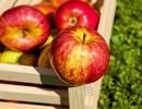 9 thực phẩm tự nhiên thanh lọc thận